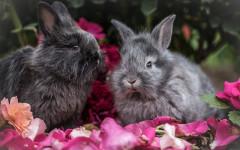 Coppia di conigli: perché e importante che vivano in coppia?