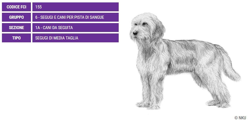 Segugio della Bosnia, carattere e prezzo - Razze cani