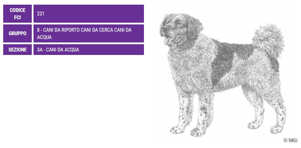 Spaniel Olandese, carattere e prezzo - Razze cani
