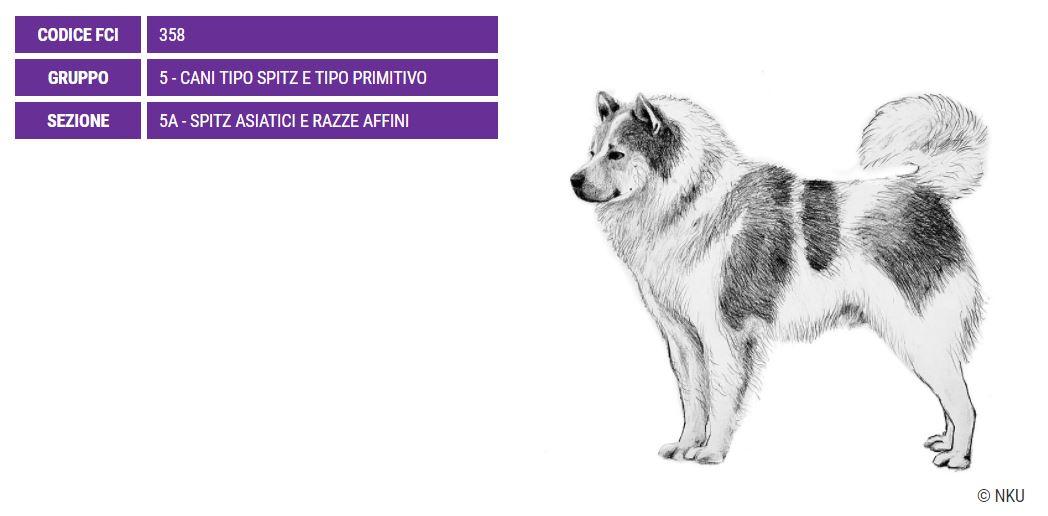 Thai Bangkaew Dog, carattere e prezzo - Razze cani