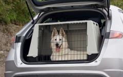 Transportin perro mediano: todo lo que debes saber