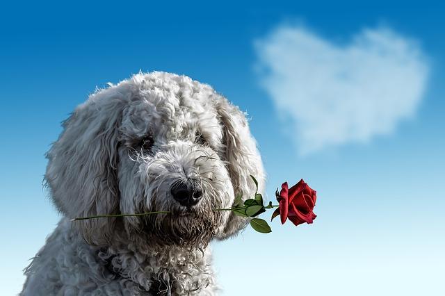 Io sono un cane: una poesia piena di amore