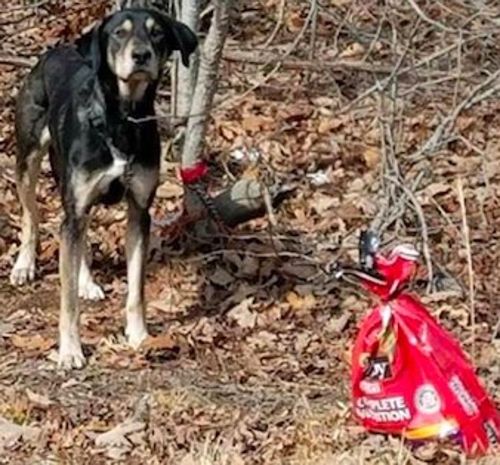 Cane legato e abbandonato trova una nuova casa