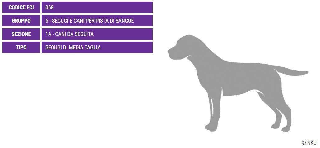 Segugio tirolese, carattere e prezzo - Razze cani