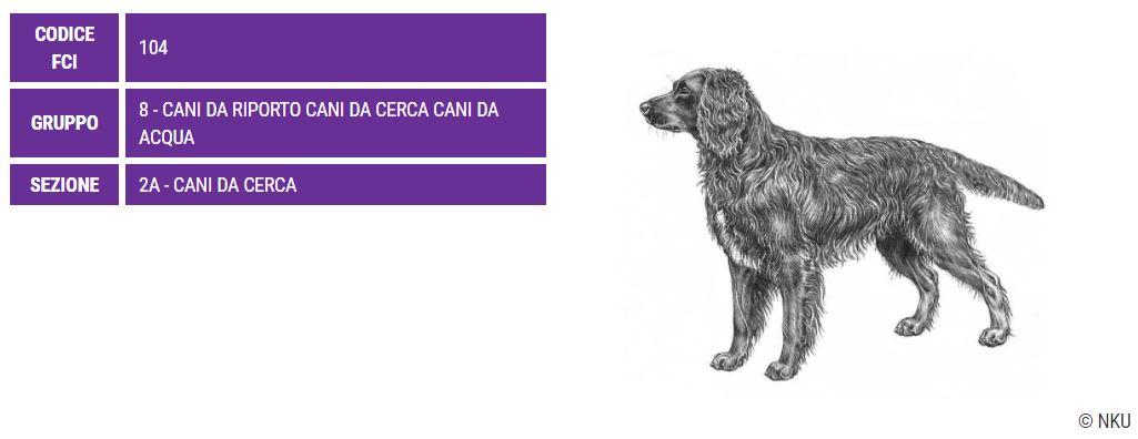 Spaniel Tedesco, carattere e prezzo - Razze cani