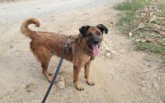 Milo cerca casa, aiutiamolo! Appello per adozione