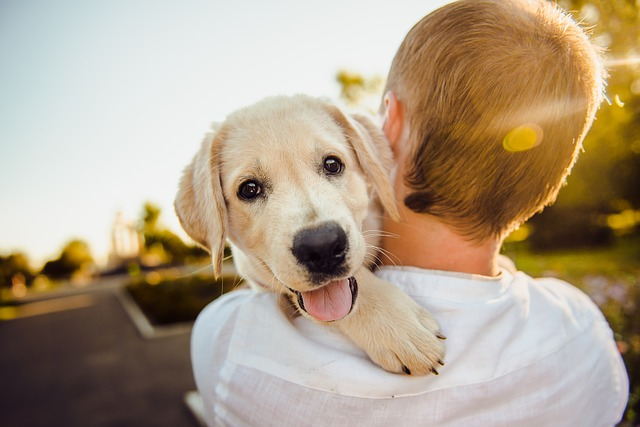 Adding a new puppy to the family: what to consider