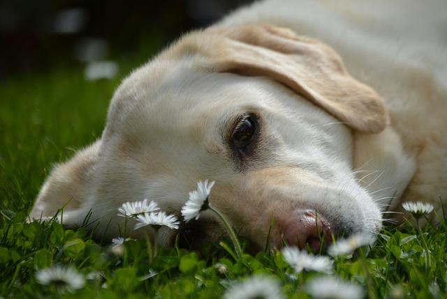 Amare i cani: sai che ci sono10 buoni motivi per farlo?
