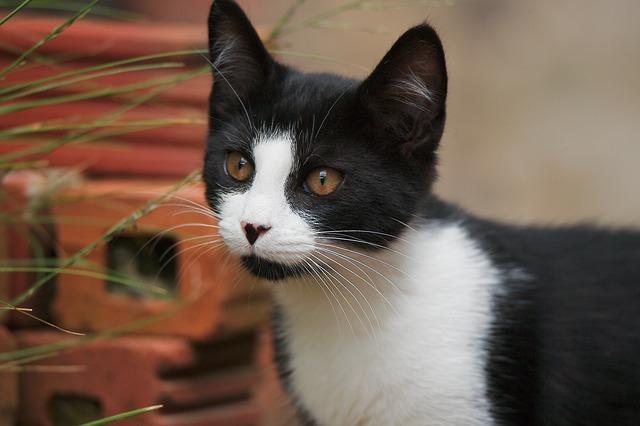 ¿Cómo educar a un gato bebé? Consejos prácticos