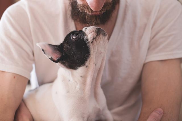 Padrone e cane: le regole del buon proprietario