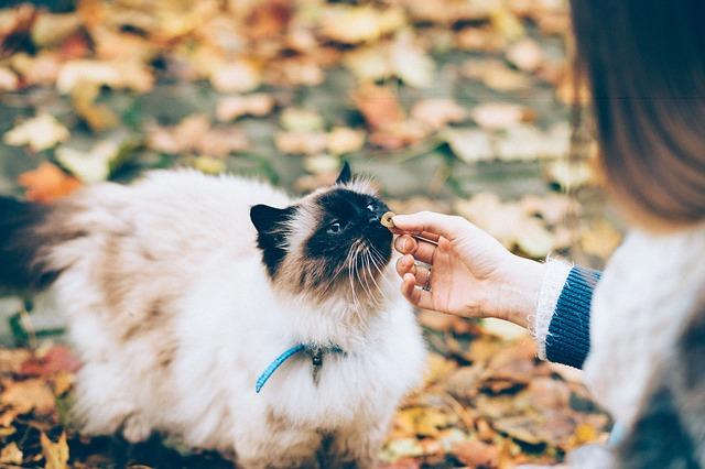 Gatti e cibo: 5 comportamenti strani dei nostri felini