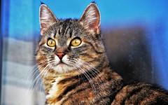 Gatti che vivono all'aperto: come aumentare il loro benessere