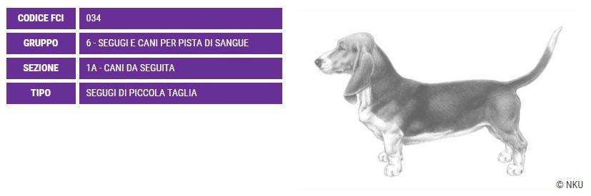 Basset Artesian Normand, carattere e prezzo - Razze cani