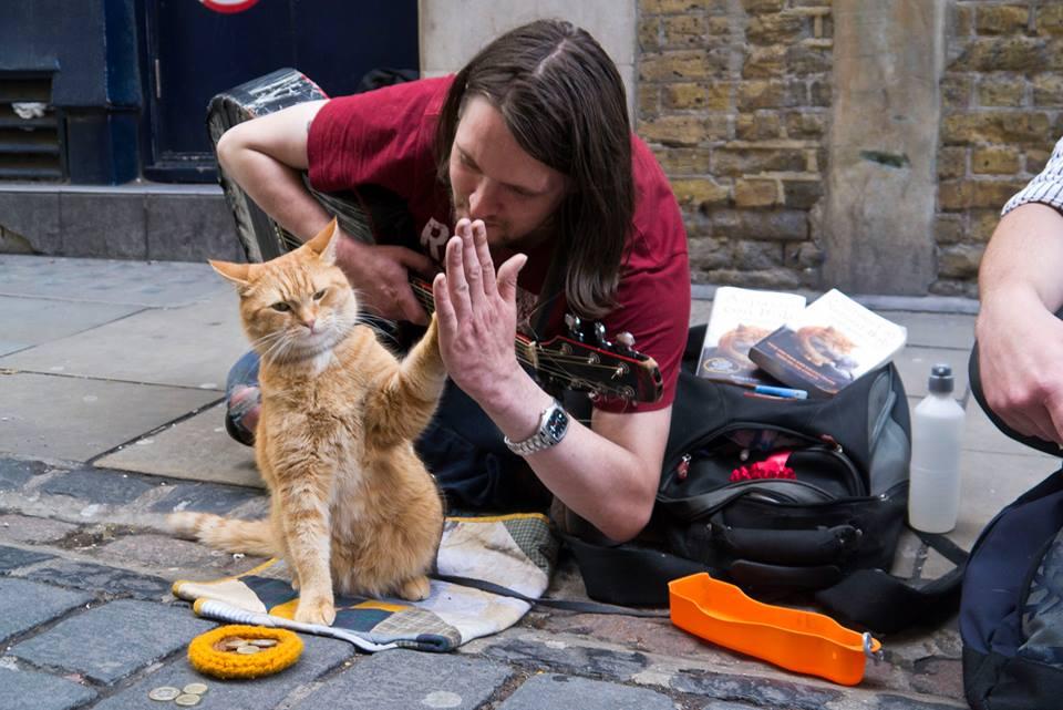 Un gato callejero llamado Bob: conócelo