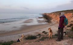 Massacro di cani in Marocco: petizione per fermare la strage