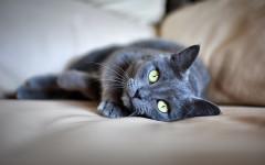 Gatti perdono il pelo: perché succede?