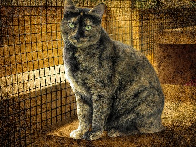Gato carey: ¿conoces alguno de estos fantásticos gatos?