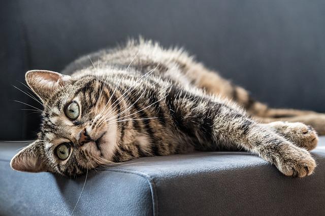 Eukanuba per gatti: cibo secco e cibo umido di qualità