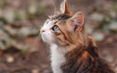 Gato volador: ¿conoces el síndrome del gato volador?