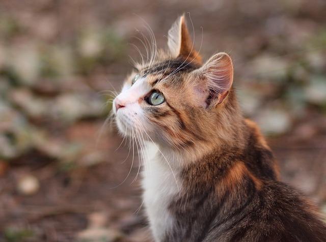 Lettiere per gatti: tutto quello che c'è da sapere