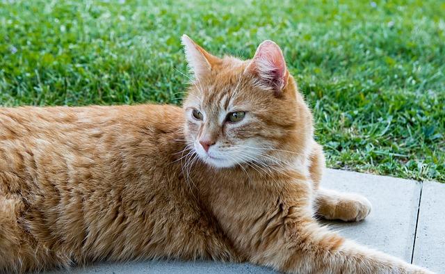 Bilirubina alta nel gatto: cause e terapie