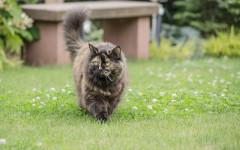 Accudire un gatto con la FIV: come curarlo?