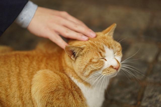 Understanding cat feelings through their body language