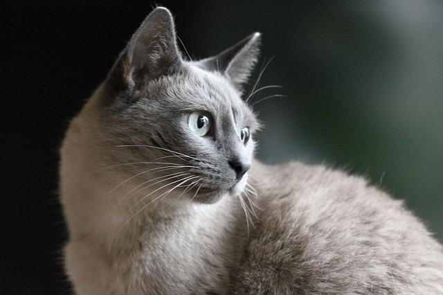 Royal Canin gatti - Royal Canin gatti sterilizzati