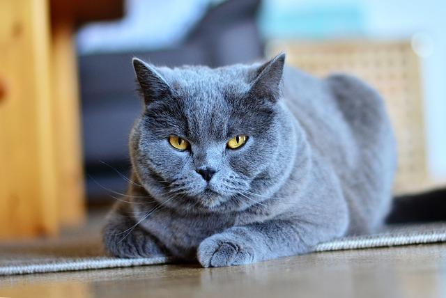 Gato no come: ¿qué hago si mi gato no quiere comer?