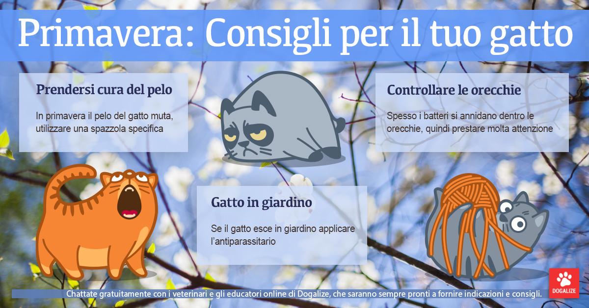 Infografica: consigli per la cura dei gatti in primavera