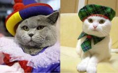 Gato disfraz: los mejores disfraces de gato