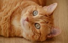 Perché il gatto morde quando lo si accarezza?