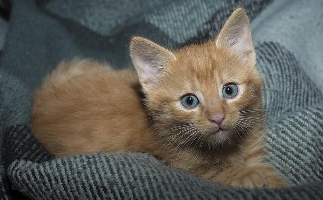 Gatti scelgono umano di riferimento da soli, lo sapevi?