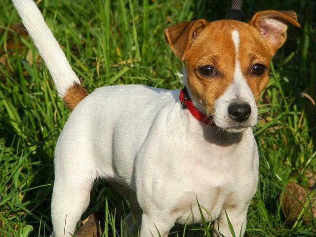 Uomo uccide cane, ma viene condannato per aggressione