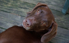 Gastriti nel cane e nel gatto: attenzione all'abuso di antiacidi