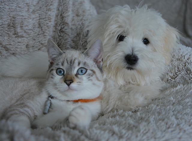 How to get a dog to like cats: face some issues