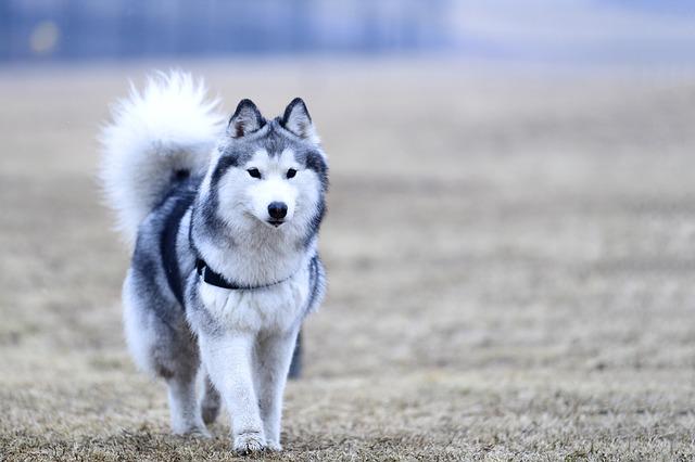 Cani si mordono la coda: perché lo fanno?