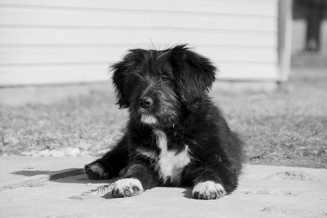 Perro rabioso: ¿Cómo detectar a un perro rabioso?