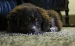 Coccidiosi nel cane: sintomi, terapia e prevenzione