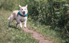 Dog Behaviour Problems? Causes and How to Solve them