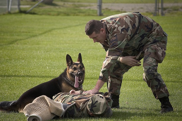 Want to adopt military dogs? Here's how.