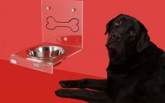 Mi perro bebe mucha agua: ¿Debo preocuparme?