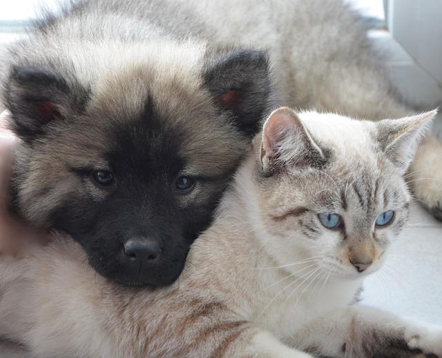 Pericoli per cani e gatti: quali sono i più comuni in casa?
