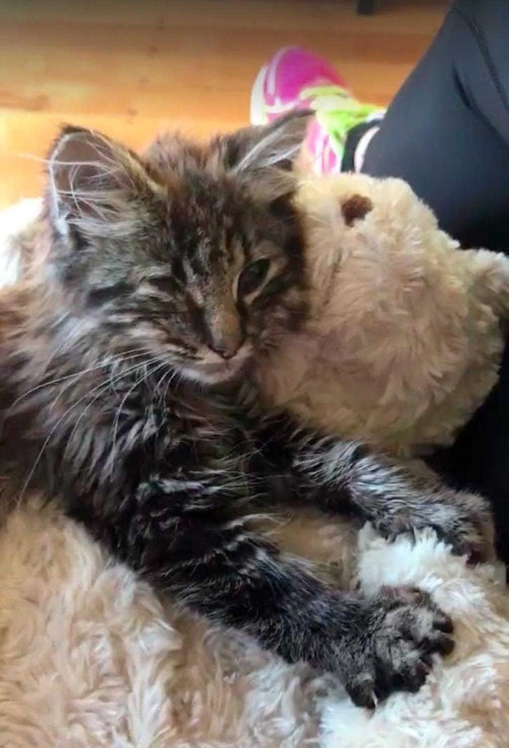 Donna salva gattina in un parcheggio: nuova vita per Woolly