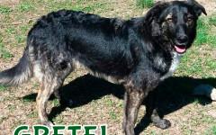 Gretel cerca casa: appello per adozione