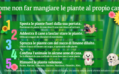 Infografica: come non far mangiare le piante al cane