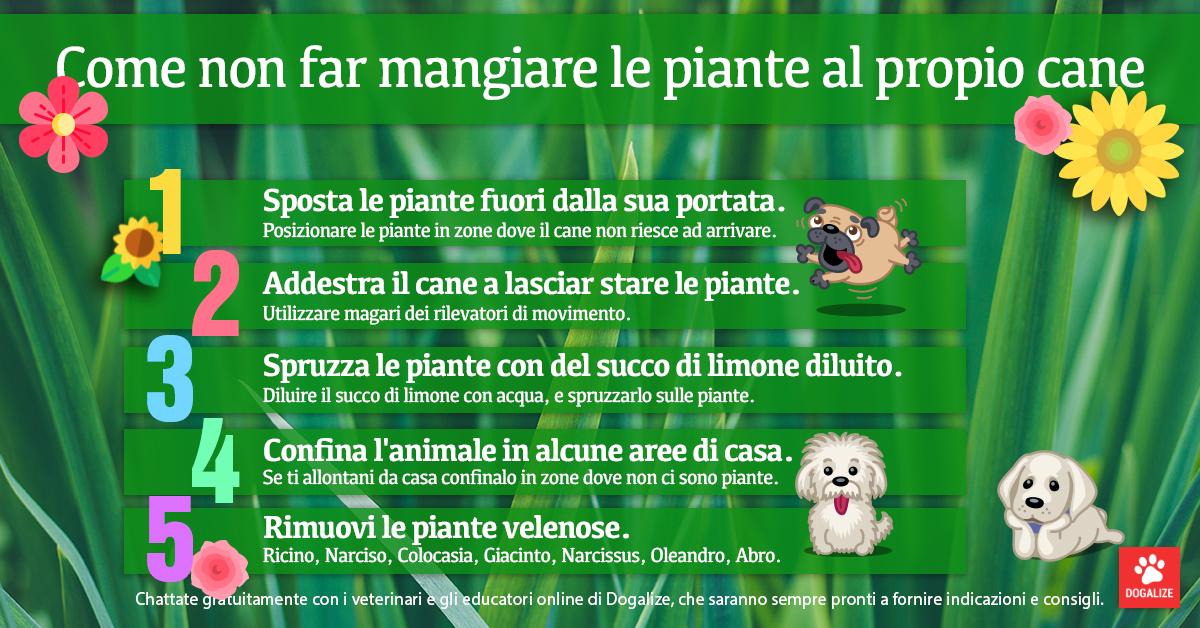 Infografica: come non far mangiare le piante al cane