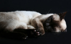 Why do cats sleep so much? Some important facts