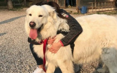 Cane sequestrato torna a casa: Miro abbraccia la sua famiglia
