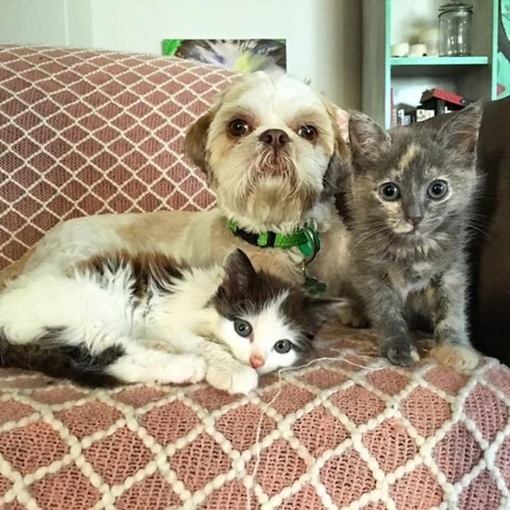 Cane aiuta gattini bisognosi di amore e se ne prende cura